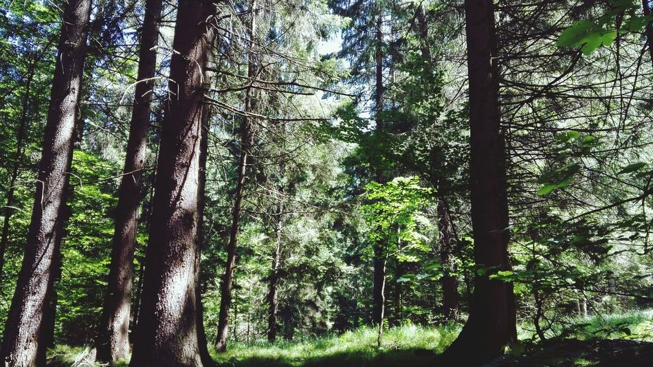 Breathing Space Tree Nature Growth Beauty In Nature Forest Day Green Color No People Outdoors Sky Taking Photos Shadow Blue Creativity Nature Photography Enjoying Life Relaxing Hanging Out Beauty In Nature Home