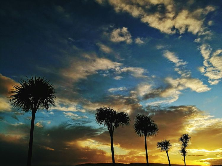 Palm Tree Beach Photography Beauty In Nature My Kind Of Beautiful :) Sunset Lovers Nature Photography Sunset_collection Beauty In Nature Destinations Horizon Over Water Painting Special Moments It's The Little Things Lights And Shadows Love ♥ HuaweiP9 Live For The Story