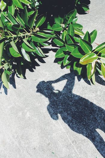 High angle view of shadow on plant on sunny day
