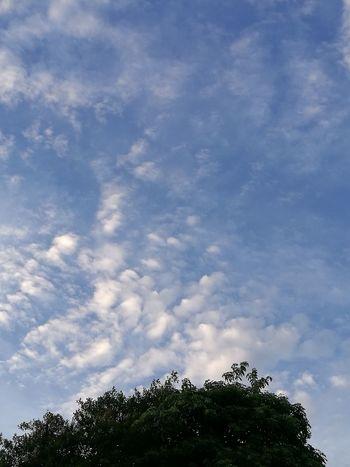 bluesky@home Blue Sky Blue Tree Thailand Huawei P9 Plus