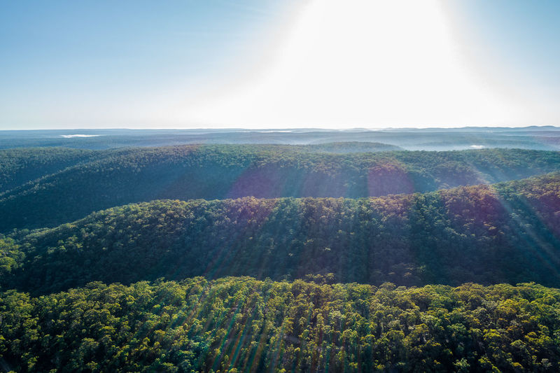 Scenic view of forest against bright sun