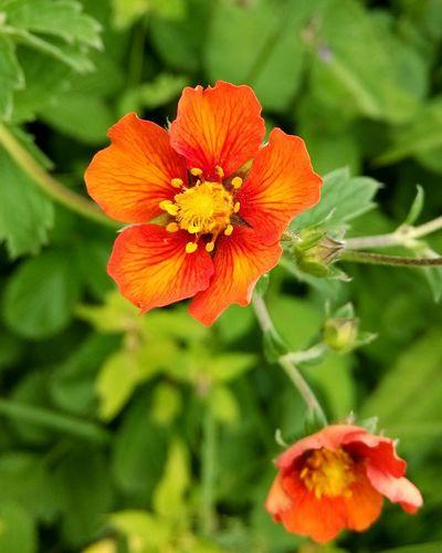 Valley Of Flowers Nature Eyem Gallery God Of Small Things Edge Of The World Uttarakhand Flowers India What I Value Tadaa Community