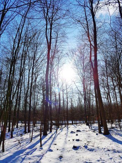 Blue Sky Clear Sky Tree Snow Winter Sun