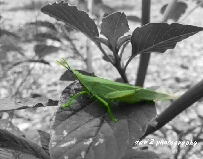 """Grasshopper"" by samsung 8mp"