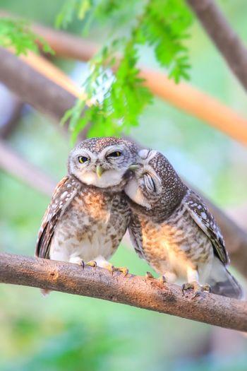 Kiss me Nature