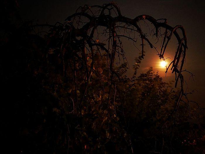 Any random night Moon Nokia8Sirocco Nightphotography Nokiaprocam 4secs Long Exposure Moonlight Tree Scary Sunset Silhouette Sky Dreamcatcher HUAWEI Photo Award: After Dark