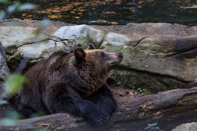Baumstamm Bar Bear Animal Animal Themes Animals In The Wild Animal Wildlife Relaxation One Animal Nature EyeEmNewHere