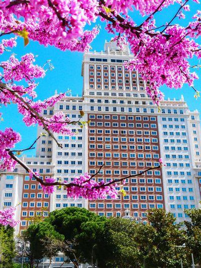 Madrid Spain Building Exterior Edificio España Cercis Siliquastrum Flowers Pink Color Blue Sky Squares Windows