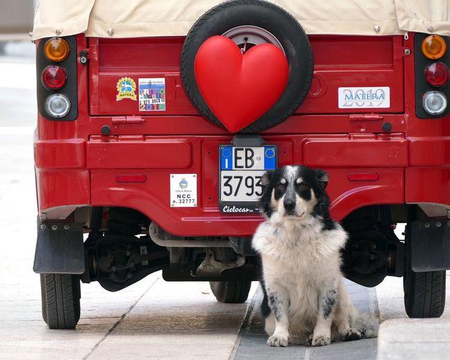 Heart Monitor Cute Dog  Dog & Jeep Dog And Heart