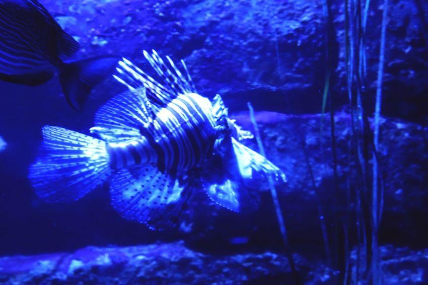 Animal Wildlife Animal Animal Themes Fish Animals In Captivity Nature Sea Life Swimming