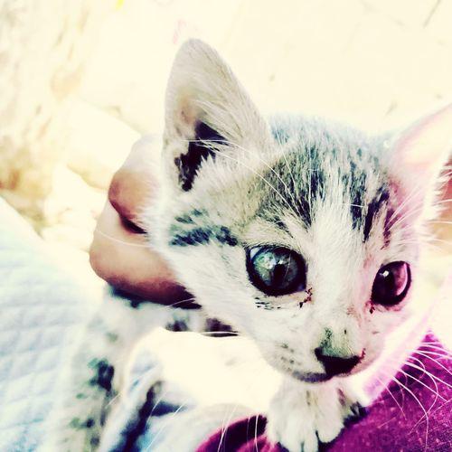Cat Beautiful Eye's Animalhome First Eyeem Photo