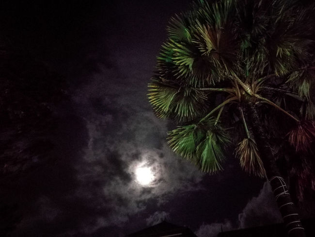 Night Palm Tree Dark Tree Nature No People Sky Scenics Beauty In Nature Moon Outdoors Illuminated Astronomy Seychelles Aesthetic Travel Destinations Tropical Climate Adventure Berjaya Beach Seychelles Full Moon Clouds Effect Green Color Nature Growth