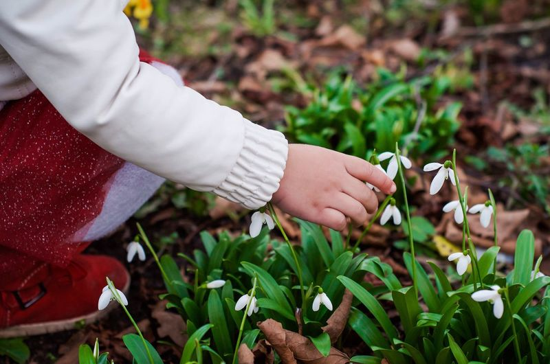 Low section of girl picking flowers while crouching on field