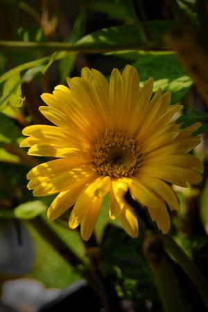 Flower Yellow Pretty Nature Macro Beauty