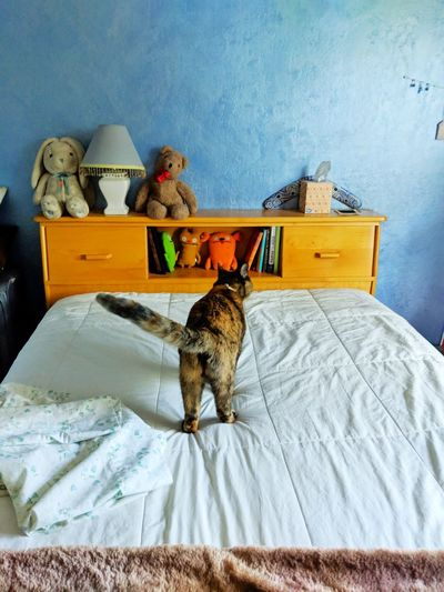 Cat sitting on bed at home