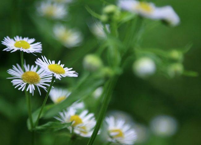 kumamoto Japan Flower 熊本県 花