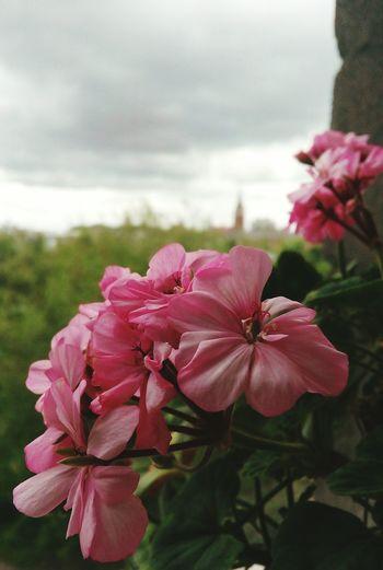 Flowers Sky Spring CalmDays