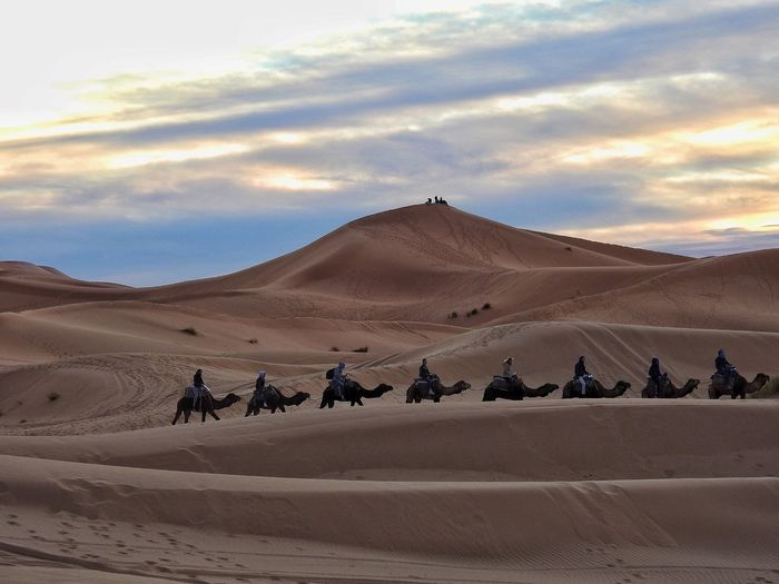 Check This Out Hanging Out Hello World Taking Photos Relaxing Morocco Merzouga Camel Riding Camel Sand Dune Enjoying Life Group Sunset Row Hello World Check This Out Sahara Desert Desert Beauty