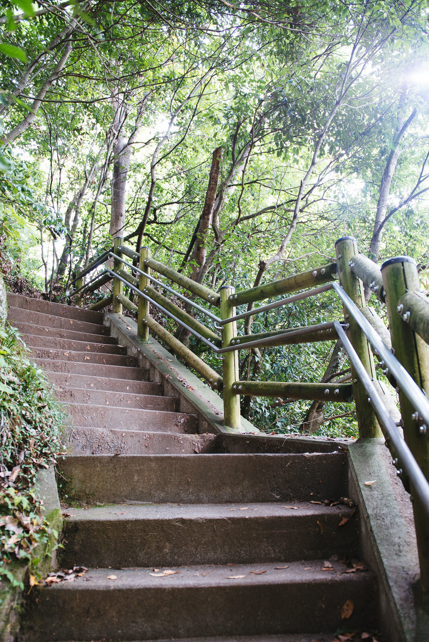 Stairs Along Trees