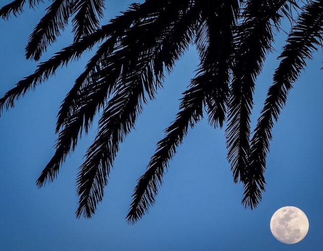 Coming Out of a Mercuryretrograde Full Moon and Blue Sky Early Evening Pinetrees Focus On Double Make Magic Happen Extensions