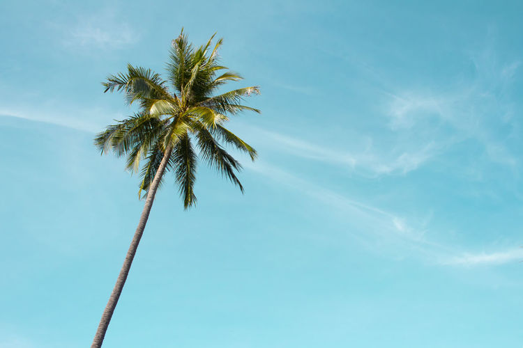 Coconut tree Beauty In Nature Blue Cloud - Sky Coconut Palm Tree Day Growth Low Angle View Nature No People Outdoors Palm Leaf Palm Tree Plant Sky Tall - High Tranquil Scene Tranquility Tree Tree Trunk Tropical Climate Tropical Tree Trunk