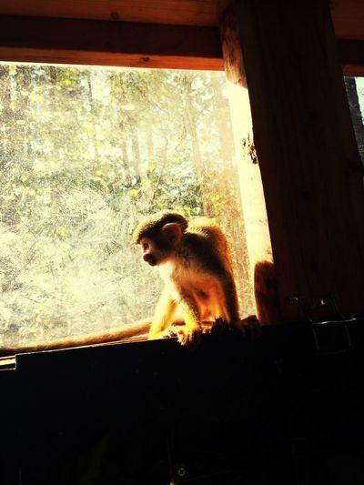 黄昏 Animals MyFavorite  Little Monkey Cheese!