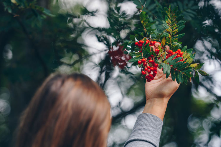 Woman Touching Berries Growing On Tree