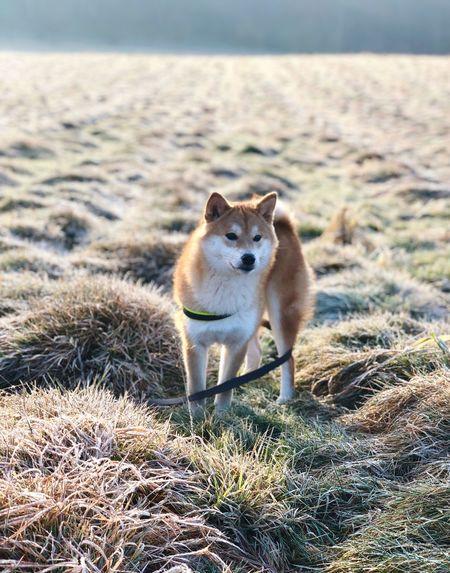 MORNING Walk YUMImaus EyeEm Selects One Animal Animal Themes Day Outdoors Looking At Camera Domestic Animals