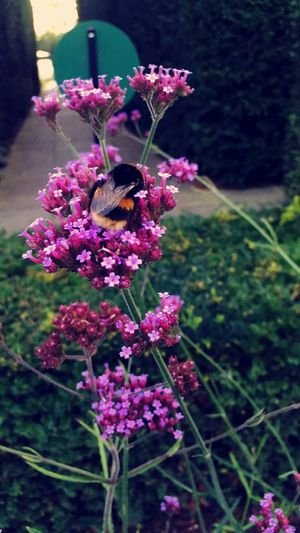 Busy Bee .. 🐝 Nature EyeEm Nature Lover Check This Out Hello World Taking Photos Enjoying Life Hanging Out EyeEm IPhoneography IPhone