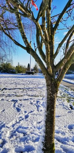 Snow Canada Winter Winter Wonderland Misty Morning Winter Sun Winter Sky North Vancouver Vancouver British Columbia, Canada Tree Canada Flag Blue Sky No People Branches Branches And Sky Tree Nature Outdoors Day No People Scenics Sky Beauty In Nature Tree Trunk Growth Winter