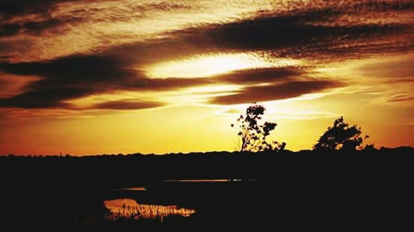 Taking Photos Relaxing Enjoying Life EyeEm Sunset Sunset_collection Sunset Silhouettes Cloud_collection  Clouds And Sky Colors Of Nature Naturelovers Nature Photography No People Tranquil Scene Tranquility Harkness State Park Waterford, CT United States