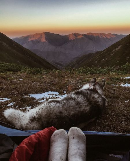 Low section of person in tent by dog during sunset