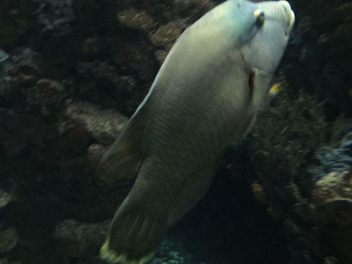 Fisch Burgers Zoo Animal Themes Animals In The Wild Animal Animal Wildlife One Animal Underwater Sea Sea Life UnderSea Marine Fish