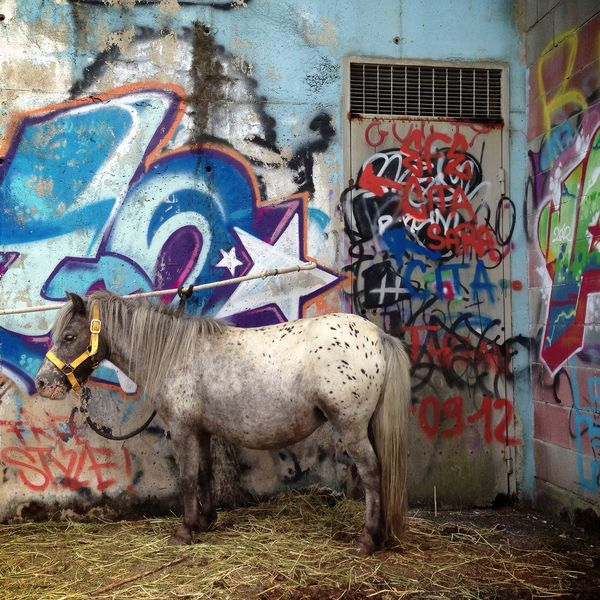 g r a f f i t i - p o n y Pony Graffiti Fiera Animals Animali Fair Cavallo