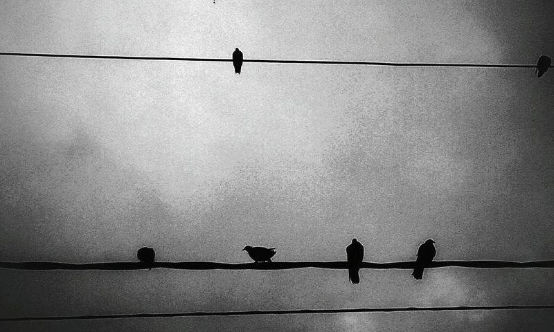 Pigeons on the Electric Wires Snapseed Grunge_effect Grey Clouds Sky And Clouds Sky_collection Monochrome _ Collection Black & White Blackandwhite Photography Bnw_friday_eyeemchallenge Noir