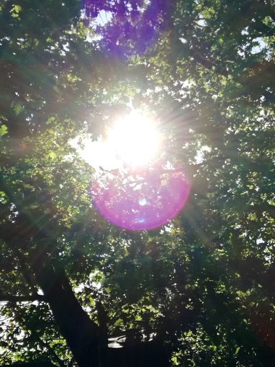 Tree Nature Sunlight Outdoors Beauty In Nature Sun No People Day Sky Scenics