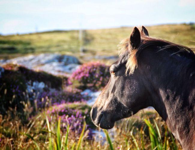 """Tha valley gleams like the pile unpon a mountain pony's coat"" EyeEm Nature Lover Tadaa Community"