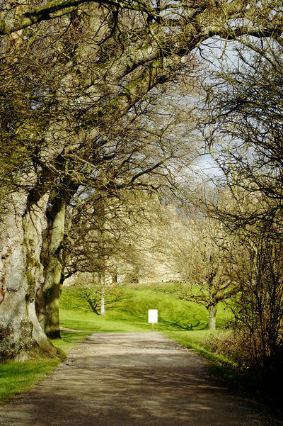 The scenic path at Bodiam Castle Bare Tree Branch Day Nature Nature Outdoors Park Path The Way Forward Tree Tree Trunk WoodLand