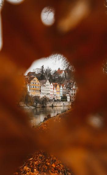 Canal by buildings seen through autumn leaf