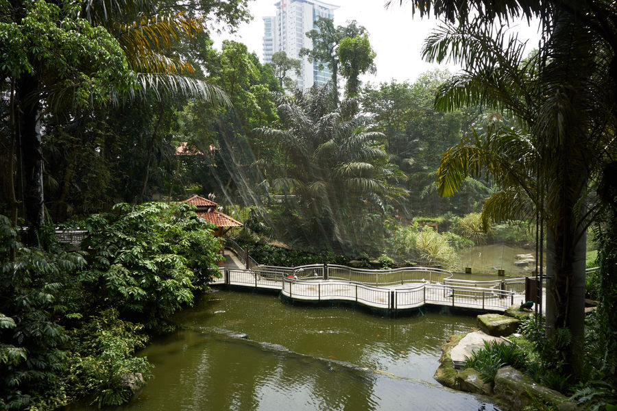 Pond Aviary Beauty In Nature Day Forest Growth Nature One Person Outdoors Plant River Scenics Tree Urban Garden Water