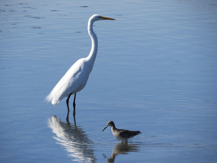 Egret And Wader In Lake
