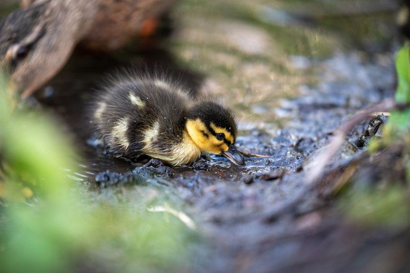 Close-up of a baby bird