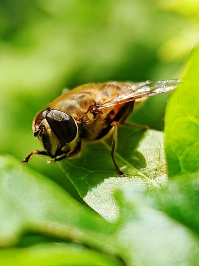 Close-up of bee on leaf