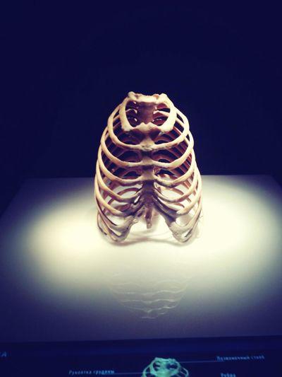 тайны тела в ветошный Bones Body