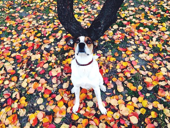 Let Your Hair Down Dog Dogs Doghairstudio Hair Hairstyle Haircut Cute Pets Cute Cute Dog  Puppy Showing Imperfection Puppies Pet Hair Style Nature Autumn Autumn Colors Autumn Leaves Autumn Collection Autumn🍁🍁🍁 Leaves Leaf Nature_collection Nature Photography