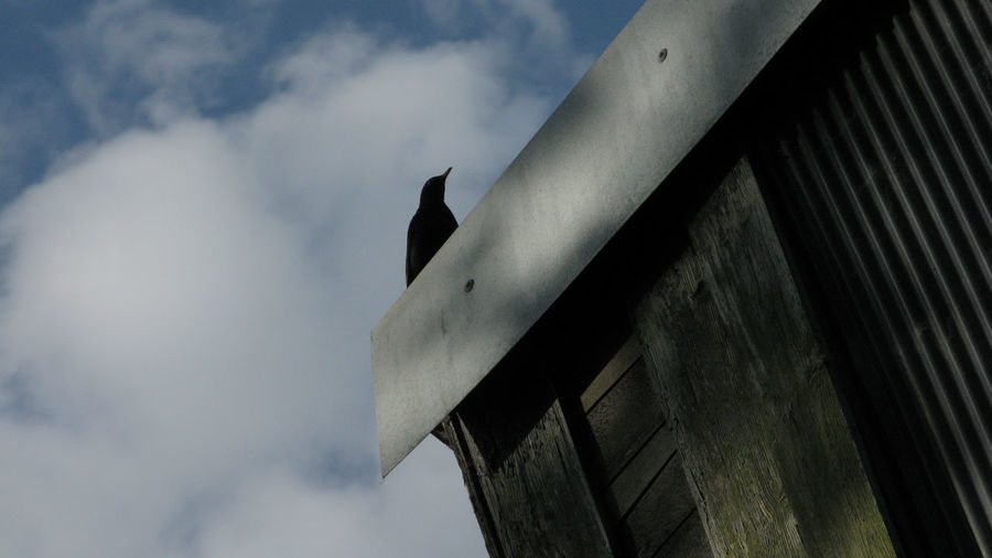 Black Bird against the Sky Architectural Building Detail Building Angles Blue Sky White Building Corners Diffused Documentary Reportage Taking Photos Fotos My Point Of View Black Bird Against Sky Clouds Blue Sky Wooden Building Roof Structure Sunny Day Sun Sunshine Song Bird Ceiling Cropped Design Environmental Conservation Flooring Indoors  Metal No Limits Part Of Photography Taking Photos Reportage Documentary Photography Protection Railing Staircase Steps Steps And Staircases Structure Technology Urban Wall Wood Wooden