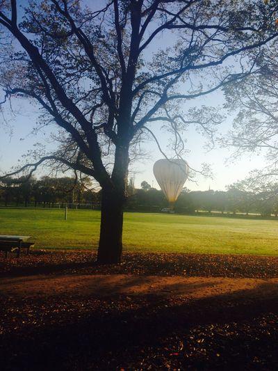 Trees balloons
