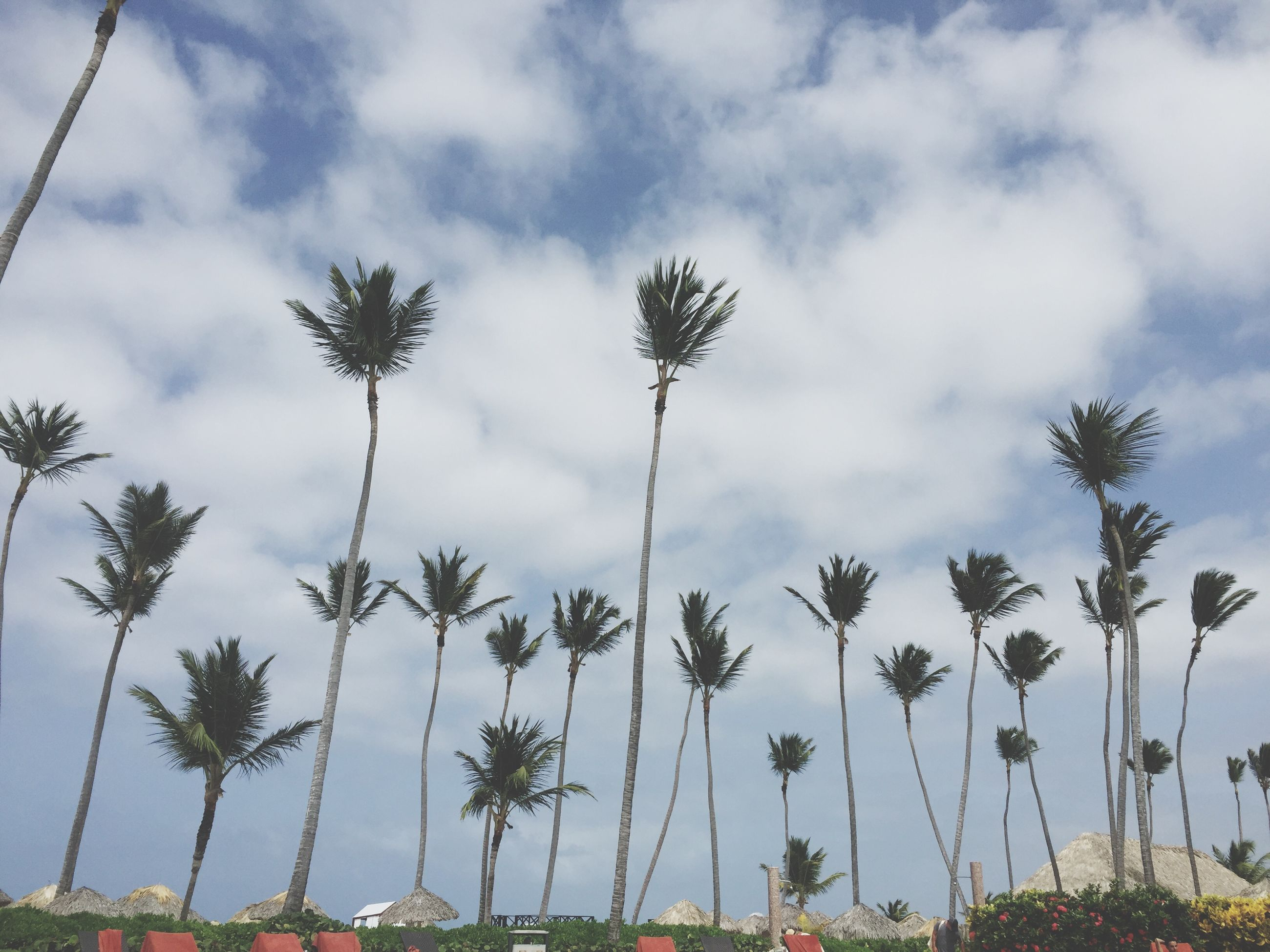 sky, palm tree, growth, low angle view, tree, cloud - sky, tranquility, nature, beauty in nature, cloud, plant, cloudy, tranquil scene, scenics, tree trunk, growing, day, outdoors, no people, flower