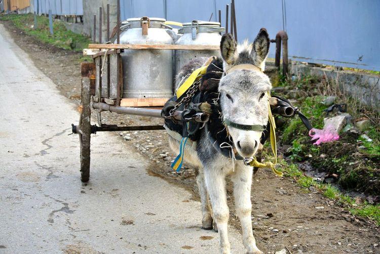 Donkey cart on street