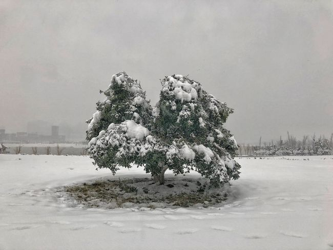 Circle Hefei China Winter Cold Temperature Snow Weather Nature Cold Tree